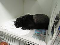 Coal's story COAL NEUTERED MALE, DSH, 4.5 YEARS