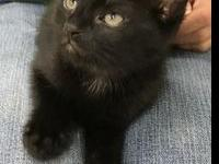Coal's story I am a 2 month old kitten and I am ready