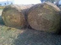 $85/bale for 10+ and $90/bale if purchasing less than