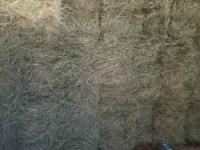 We have premium coastal squares bales for sale. Hay can