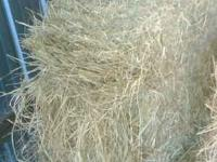 Coastal hay from Pensacola, FL region....Kept in