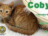 Coby's story You can fill out an adoption application