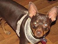 Coby's story Coby is 5 years old, neutered chipped, a