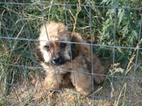 This is a darling little boy who already had a home but