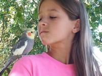 my child has a cockatiel bird that we are trying to
