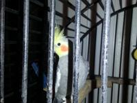 I have 6 cockatiels that are friendly and lovable. They