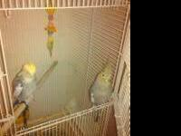 i am rehoming two cockatiels with cage. the yellow head