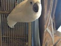 I have a 4 years old male cockatoo that I've decided to