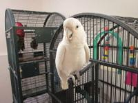 I have a sweet 19 year old cockatoo we got her about 3