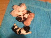i have 4 more cockers to sell they are very sweet