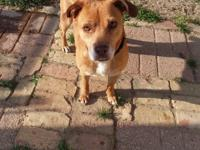 Coco is a sweet little 30 lb terrier mix. She is such a