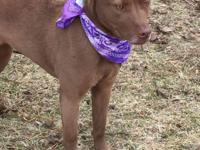 COCO (#12836) - Coco (female) is between 3-4 yrs old,
