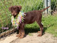 Coco is a sweet gorgeous young puppy,  possibly around