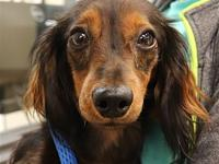Coco's story Coco is a very sweet boy looking for a