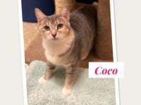 ADOPT ME...*Coco* and her sister Lilo are available for