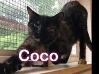 Coco's story Hi my name is Coco I am an adult female