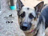 CoCo's story Coco is a shy 6 year old female who was