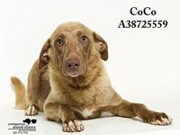 Coco's story All dogs in the adoption program are