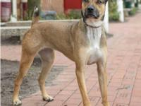 Coco is a very friendly and active girl that loves long