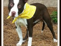 Coco is a very playful, sweet, fun-loving girl. She