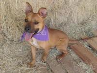 This sweet and spunky Boxer mix pup is looking for a