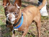 Coconut's story You can fill out an adoption