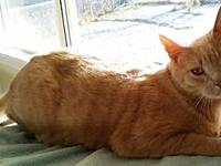 Cody's story Looking for a name for your new cat or