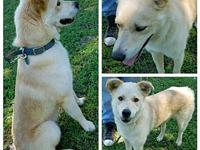 Cody's story Available thru Rescue Rangers in Decatur