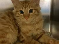 Colby's story Hi there! I'm a cute little kitty looking