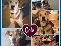 Cole's story Pet's Bio: Cole is a long, lanky guy (