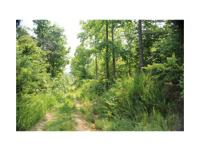 Outstanding 42 acre recreational timberland tract for