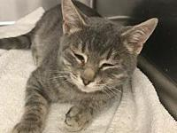 *Colleen's story Colleen is a very sweet girl who is