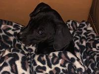 My story Puppy Adoption Fee is $250, inludes spay,