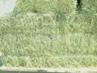 High quality horse hay for sale. Small squares