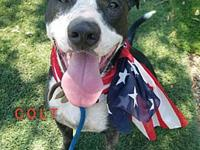 Colt's story Available to foster or adopt! Breed: Great