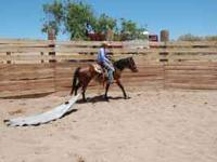 Rafter 5 Equine Services: Start to finish training.