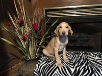 Colton's story Very sweet playful puppy good with