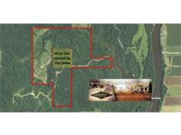 340 acre Pine and Hardwood Timberland for sale in
