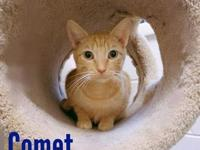 Comet's story Comet is one of our shy cats who enjoys
