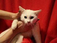 My story Meow my name is Comet, I'm a 8mo old teenage