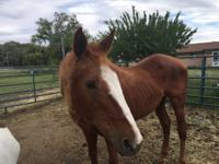 Comet is approx. 20 yrs old and has had a couple of