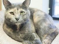 Comfort's story Comfort is a sweet, playful kitty who