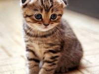 Compassionate Bengal kittens For Sale,Male and Female