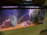 I have for sale a 55 Gallon All Glass Aquarium setup