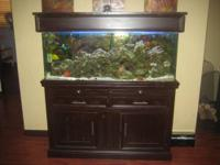 COMPLETE NICE 55 GAL SALTWATER AQUARIUM WITH CHOCOLATE