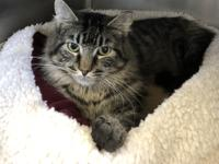 Concord is a beautiful male cat who arrived at the
