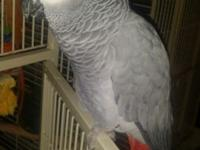 I have a beautiful female African grey 4 years of ages,
