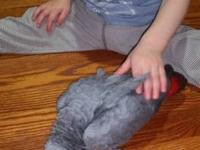 We are giving always our African Grey parrots.They are