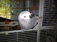 We are looking to place our foster bird.. She is under