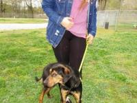 Conner is a 3 yr old Black and Tan cross. This boy is